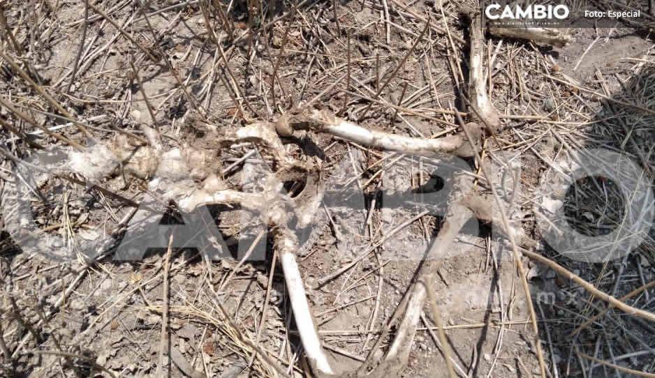 ¡Terror! Hallan restos humanos en Tecamachalco; temen que sea de un niñito  (FOTOS)