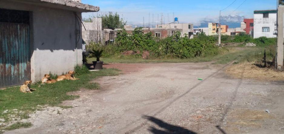Dueños de perros asesinos de Tlaxcalancingo se esconden (IMAGEN SENSIBLE)