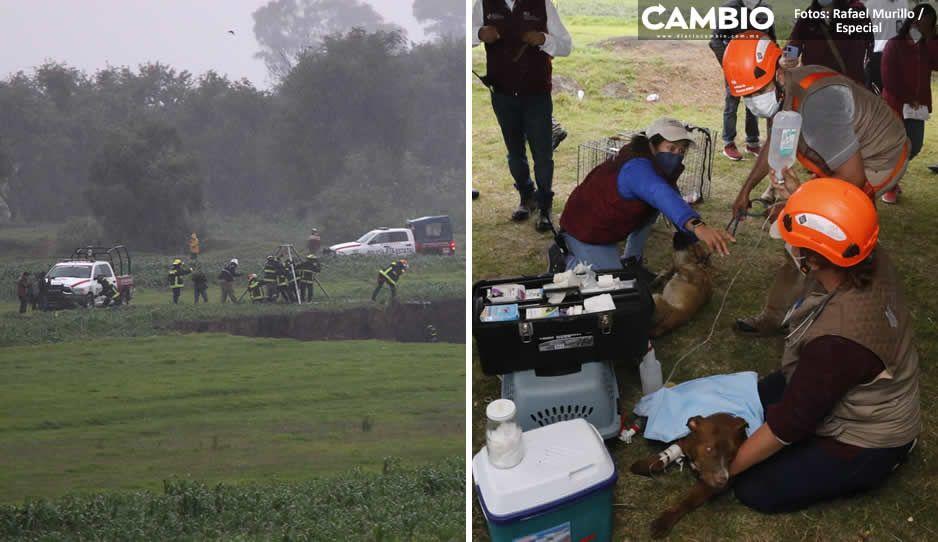Nueve héroes de Protección Civil y Bomberos salvaron a perritos Spike y Spay del socavón (FOTOS Y VIDEOS)