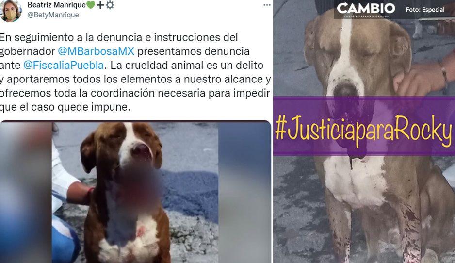 Medio Ambiente denuncia ante la Fiscalía ataque de cohetones contra perrito Rocky