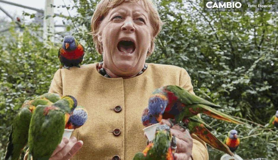 Angela Merkel es mordida por loros y su reacción se vuelve viral (FOTO)
