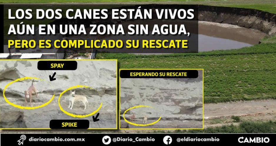 Los lomitos Spay y Spike, cayeron al socavón: todo Puebla pide que los rescaten (FOTOS Y VIDEOS)