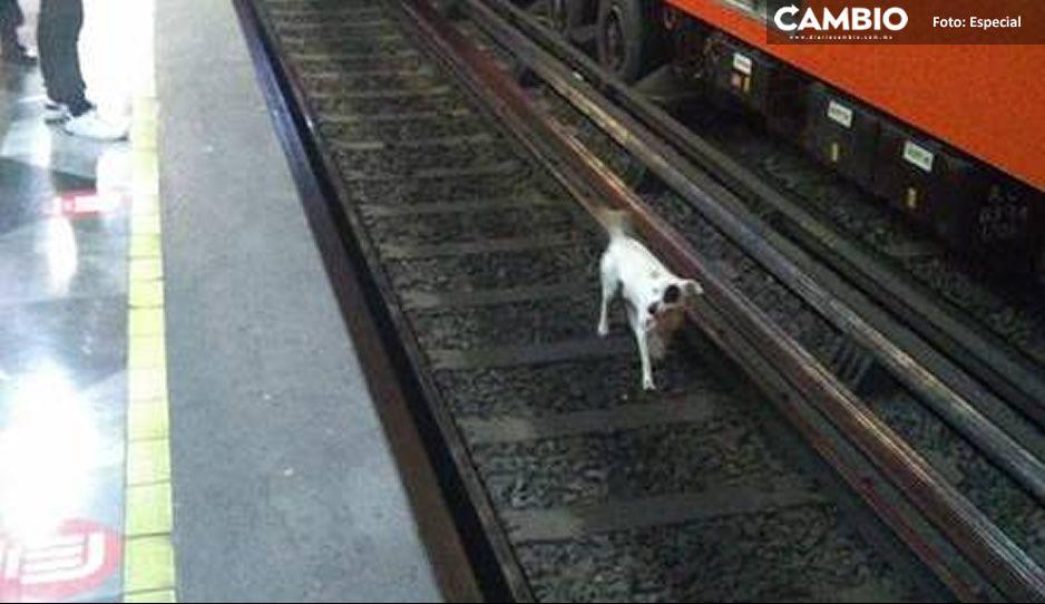 Rescatan a perrito que se atoró en las vías del Metro CDMX; siguió a su dueño a la estación (VIDEO)