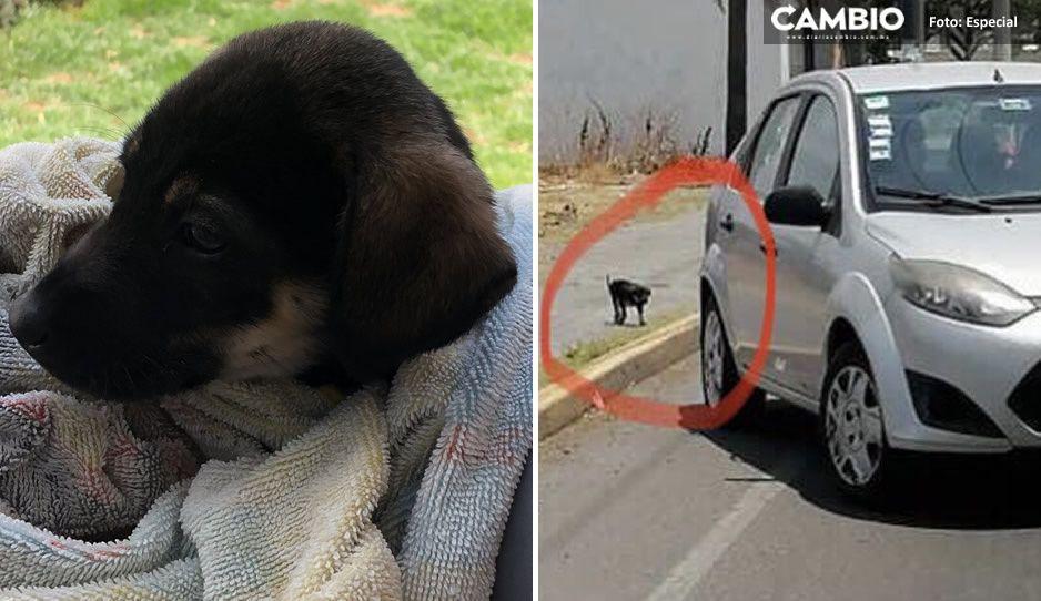 Cachorrita abandonada en la basura en Cholula busca nueva familia (FOTOS)