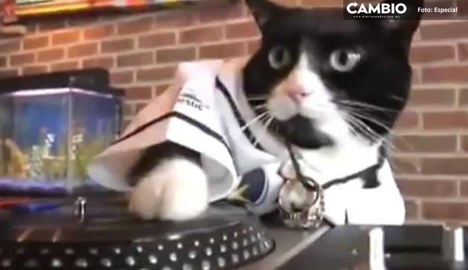 Denuncian fiesta clandestina y descubren que era el gato quien ponía música