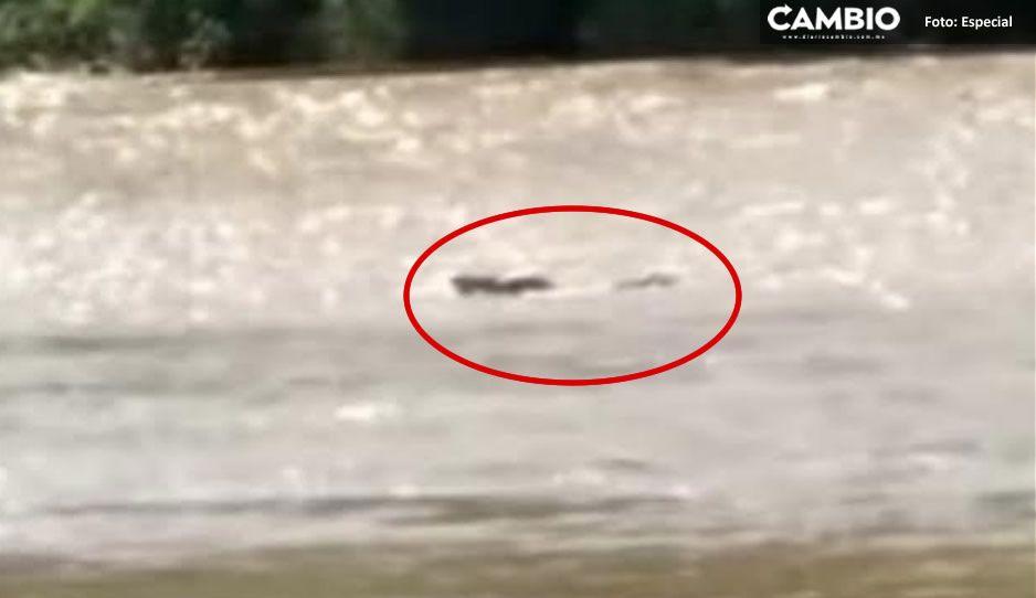Hallan cadáver putrefacto flotando en río de Axutla