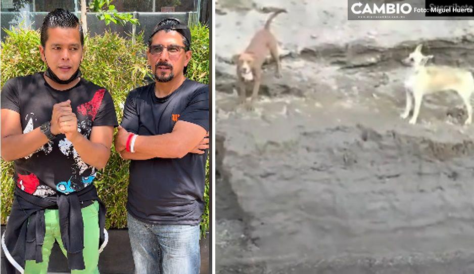 Rescatistas ecuatorianos alzan la mano para rescatar a Spike y Spay (VIDEO)