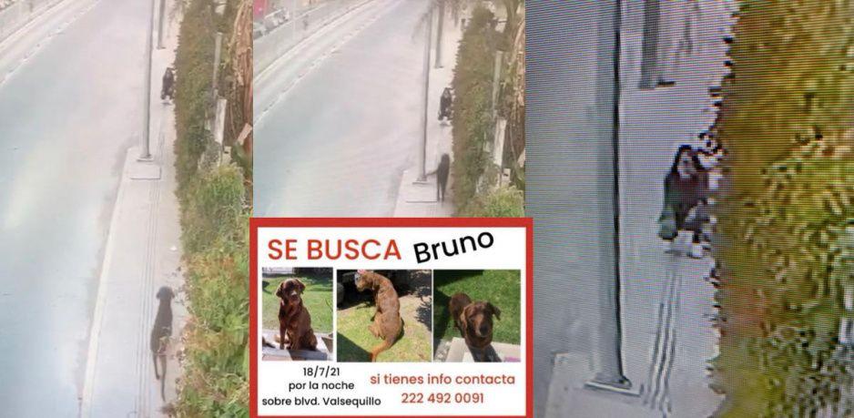 ¡Regrésenlo con su familia! Así se llevaron a Bruno, perrito extraviado en San José Xilotzingo (VIDEO)