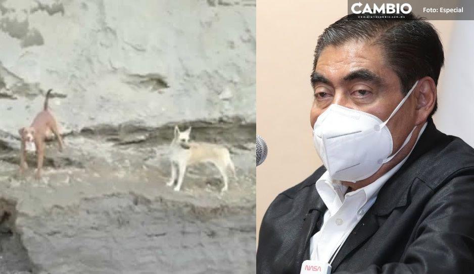 Barbosa autoriza rescate de lomitos, pero descarta uso de helicóptero o rapel; ya los alimentan