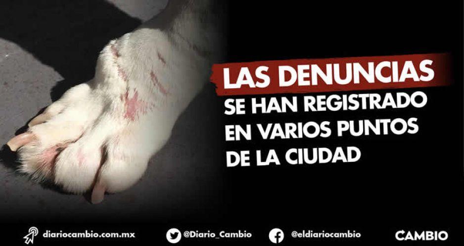 En 2020 se reportaron 48 peleas de perros en la capital; varias en Xonaca donde murió Monserrat