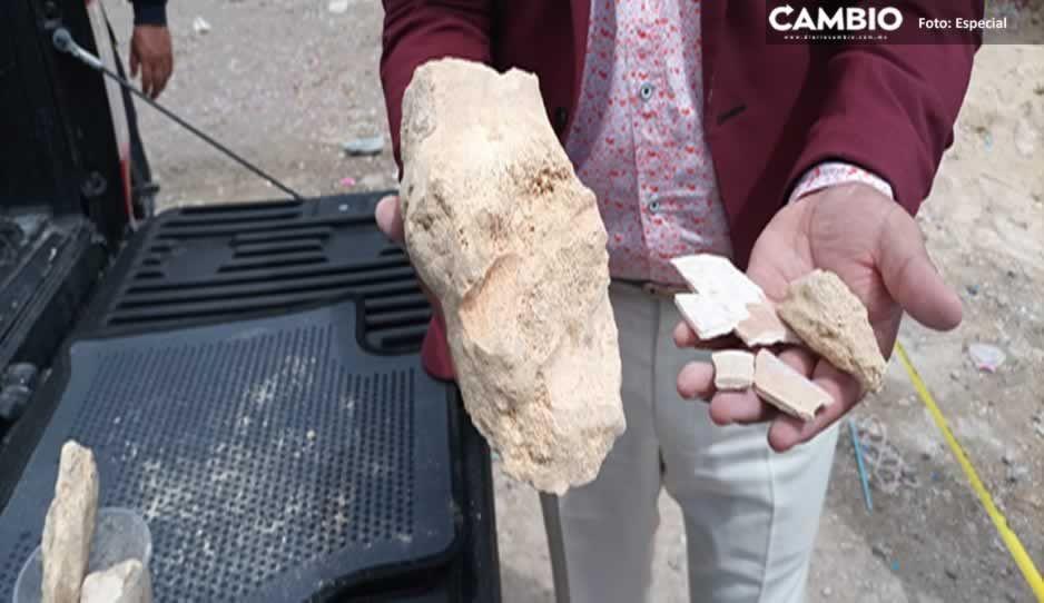 ¿Son de mamut? Encuentran asombrosos fósiles en Los Reyes de Juárez