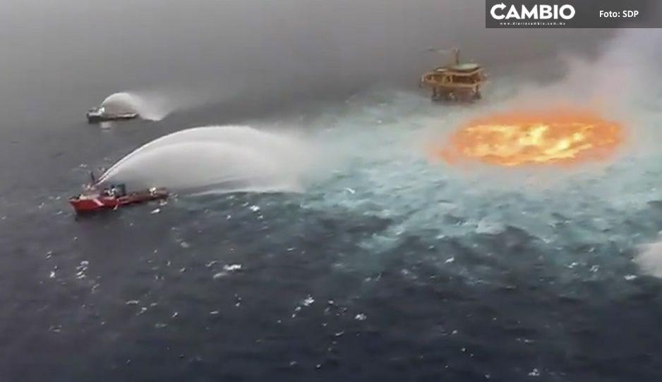 ¡Con los delfines no! Mueren animalitos marinos por explosión de Pemex en la Sonda de Campeche