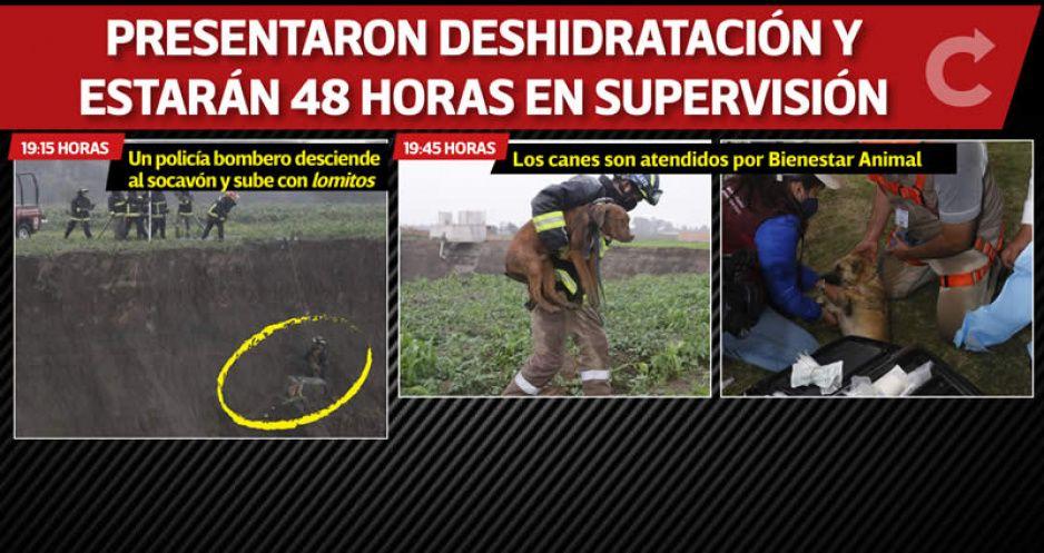 Ordena Barbosa rescate, ejecución perfecta de PC,  ¡Spike y Spay A SALVO! (FOTOS Y VIDEOS)