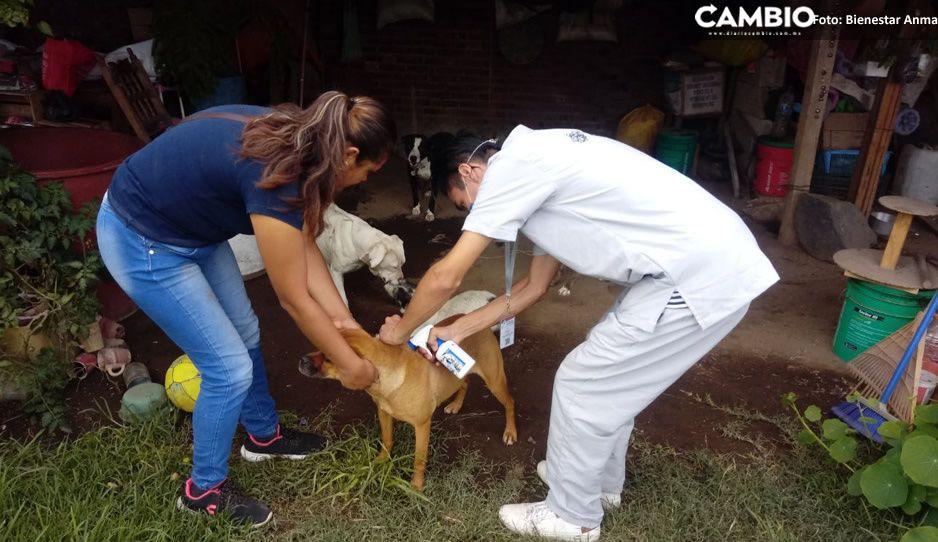 Bienestar Animal llama a vecinos cuidar de sus perritos para que no caigan en el socavón