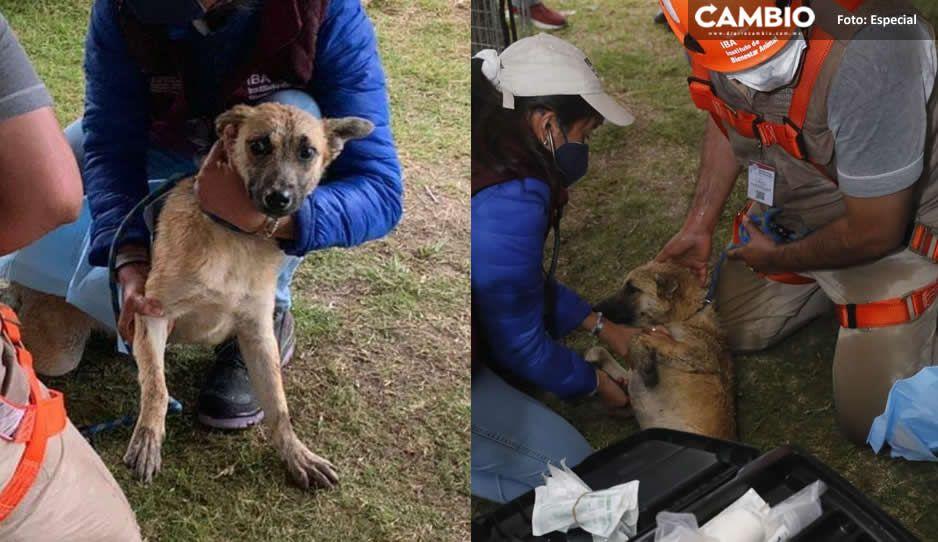 Spike, una perrita codiciada; 8 personas quieren adoptarla tras rescatarla del socavón