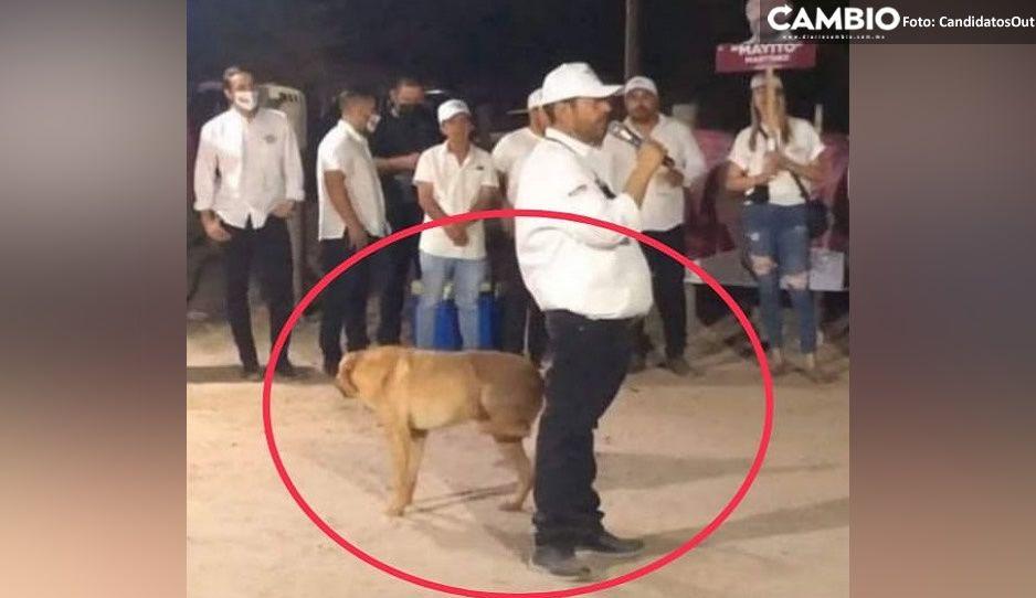 Ni los perros quieren a Morena: lomito se vuelve viral tras orinar a candidato Mayito (FOTO)
