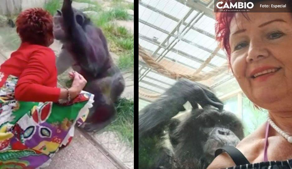 """Vetan a mujer de zoológico; asegura que tenía un """"romance"""" con uno de los chimpancés"""