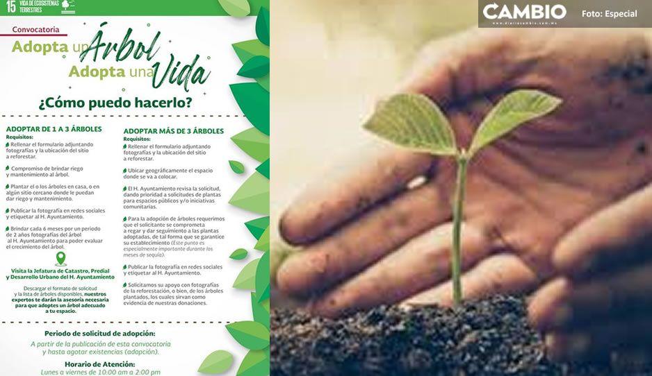 Tecamachalco inicia campaña 'adopta un árbol' en favor del medio ambiente