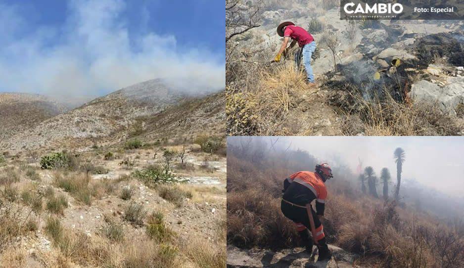 ¡Pobres animalitos! Más de 20 horas lleva el incendio en el cerro de Tecamachalco
