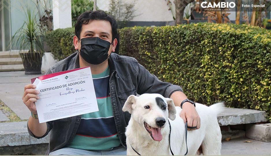 Poblano le da nuevo hogar a Ningo, el lomito que sufrió una mutilación en Huehuetlán