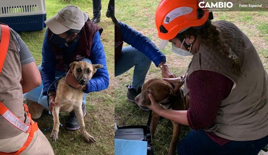 Spay y Spike estarán en observación tras ser rescatados del socavón (FOTOS)