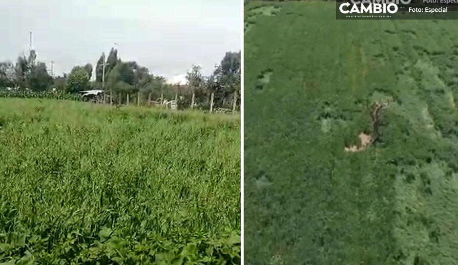 VIDEO: Vigilan con drones las misteriosas figuras en cultivos cerca del socavón