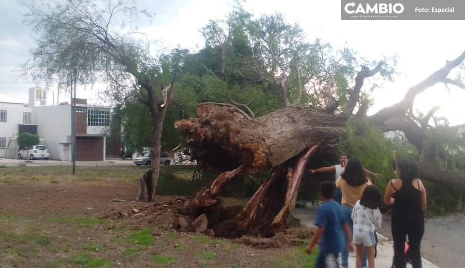 Fuertes lluvias y ráfagas de viento provocan caos en Tehuacán