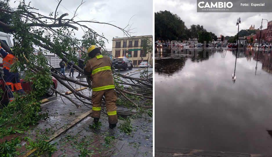 Lluvia deja árboles caídos e inundaciones en Cholula y Puebla capital (FOTOS)