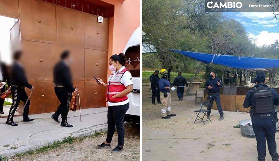 Covidiotas en Tehuacán arman peleas de gallo y hasta fiesta con mariachi en plena pandemia