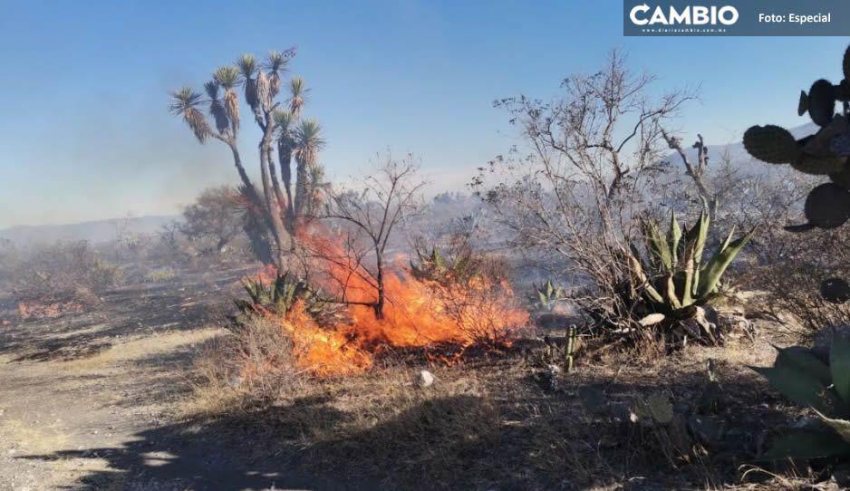 Incendios amenazan Biosfera Tehuacán-Cuicatlán; 39 hectáreas sufrieron daños en una semana