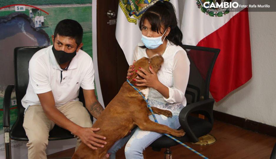 Spay, perrito pitbull que cayó al socavón, se reencuentra con su dueña Fátima (VIDEO)